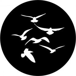 F104 Flock of Seagulls