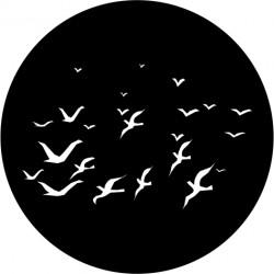 F106 Flock of Birds